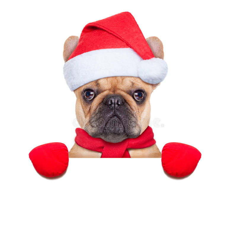 Christmas dog. Santa claus christmas dog wearing a hat behind a blank white placard , isolated on white background stock photos