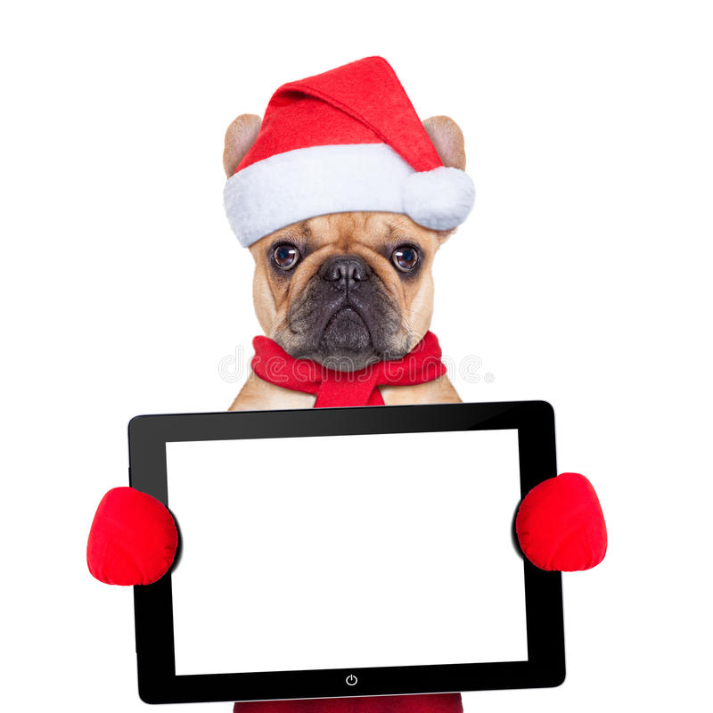 Christmas dog. Santa claus christmas dog wearing a hat holding a touchpad or tablet pc , isolated on white background royalty free stock photography