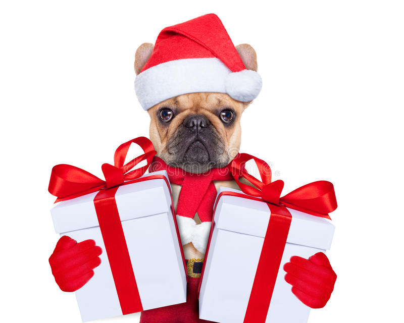 Christmas dog. Santa claus christmas dog wearing a hat with a xmas gift or present for you stock images