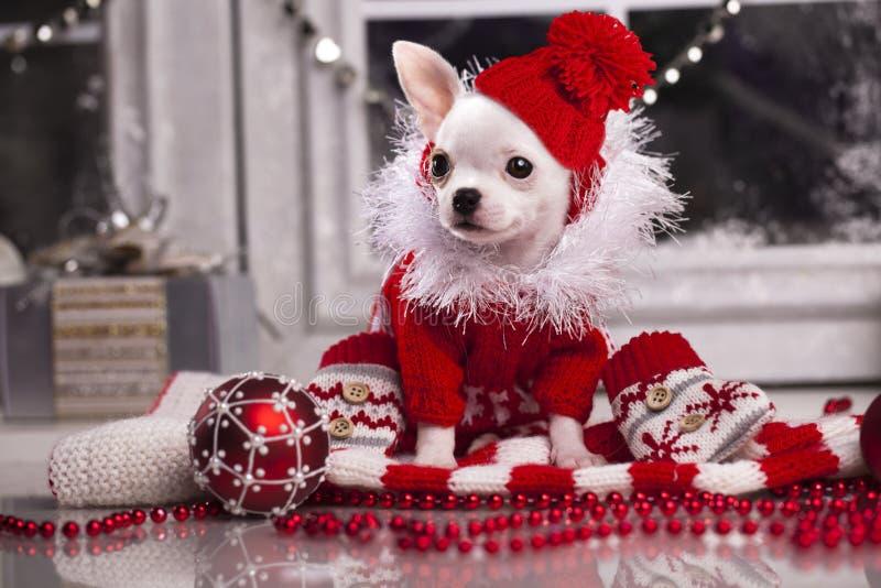 Christmas dog. In santa hat and ball stock photo