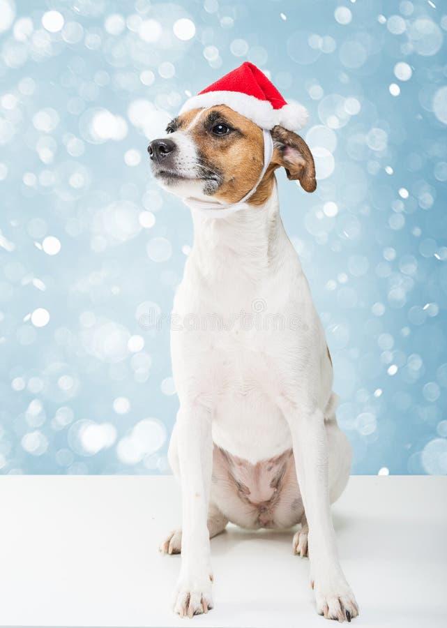 Christmas dog in santa hat royalty free stock photos