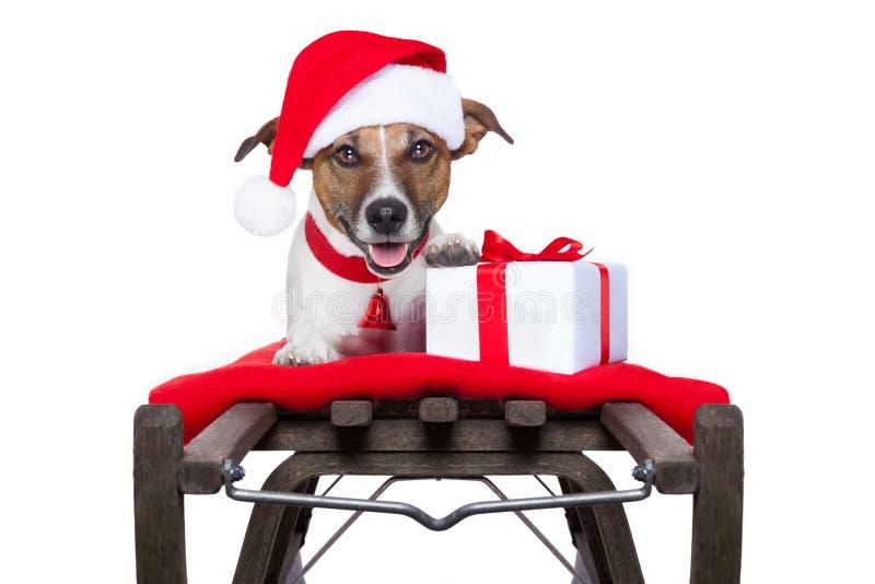 Christmas dog on sleigh. As santa royalty free stock photography