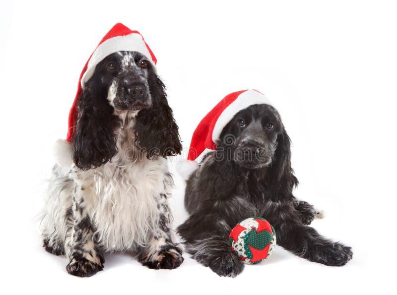 Christmas doggies royalty free stock photos