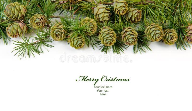 Christmas Evergreen Tree Background Stock Photography