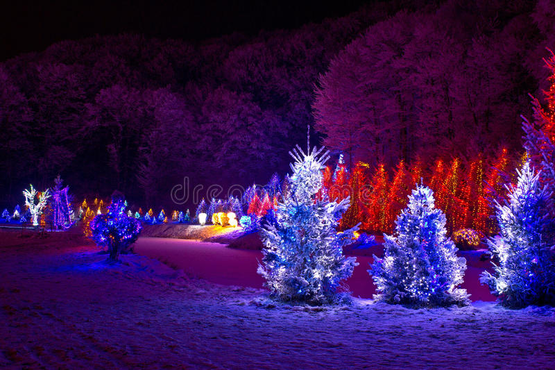 Christmas fantasy - pine trees in x-mas lights stock image