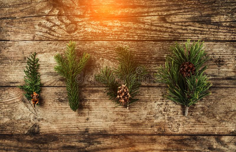 Christmas fir branch, spruce, juniper, fir, larch, pine cones on wooden background. stock images