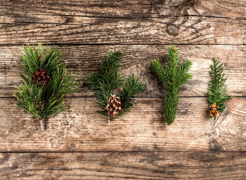 Christmas fir branch, spruce, juniper, fir, larch, pine cones on wooden background. royalty free stock image
