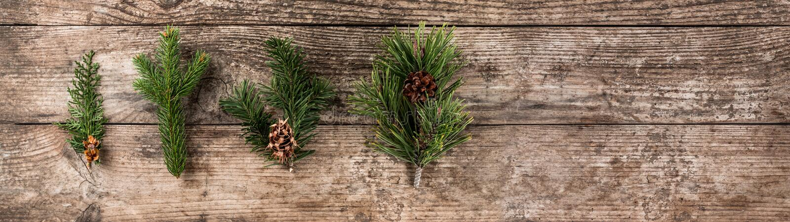 Christmas fir branch, spruce, juniper, fir, larch, pine cones on wooden background. Xmas and New Year theme royalty free stock photo
