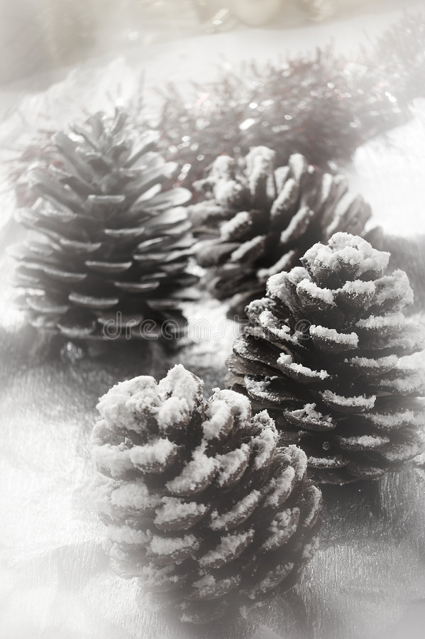 Free Christmas Fir Cone Stock Photography - 1404292