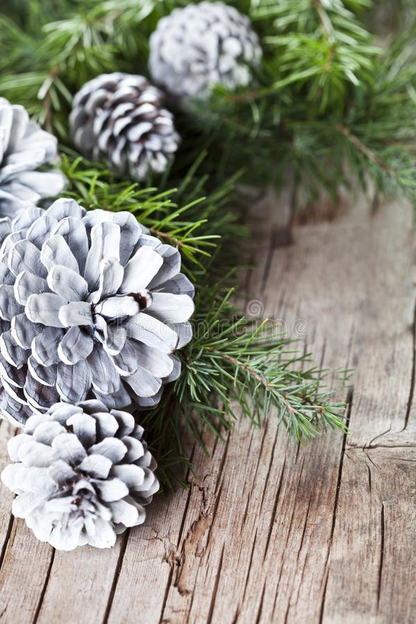 Christmas fir tree branch and white pine cones. royalty free stock photo
