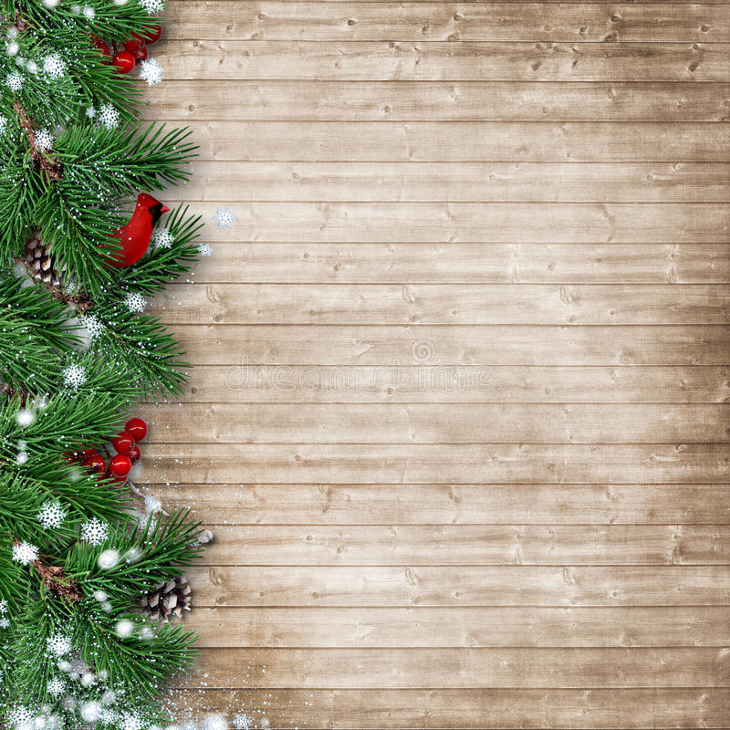 Christmas fir tree with a cardinal on a wooden background royalty free stock photography