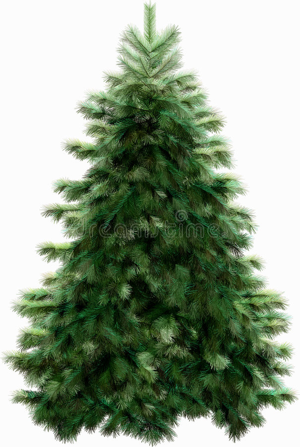 Christmas firtree with clipping path stock image