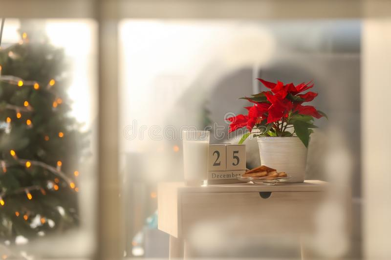 Christmas flower poinsettia with cookies and glass of milk on wooden table royalty free stock photos