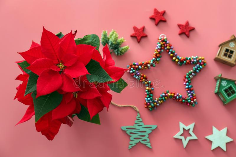 Christmas flower poinsettia with decorations on color background royalty free stock images