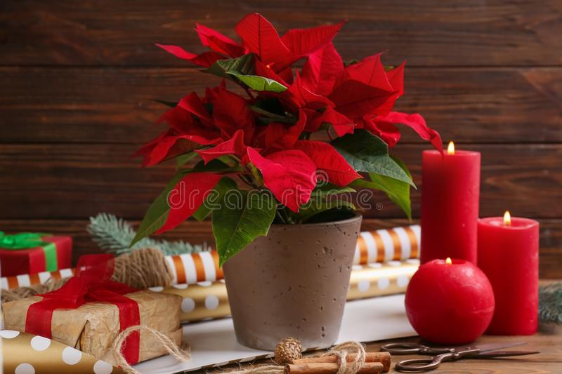 Christmas flower poinsettia with gift boxes and burning candles on wooden table royalty free stock images