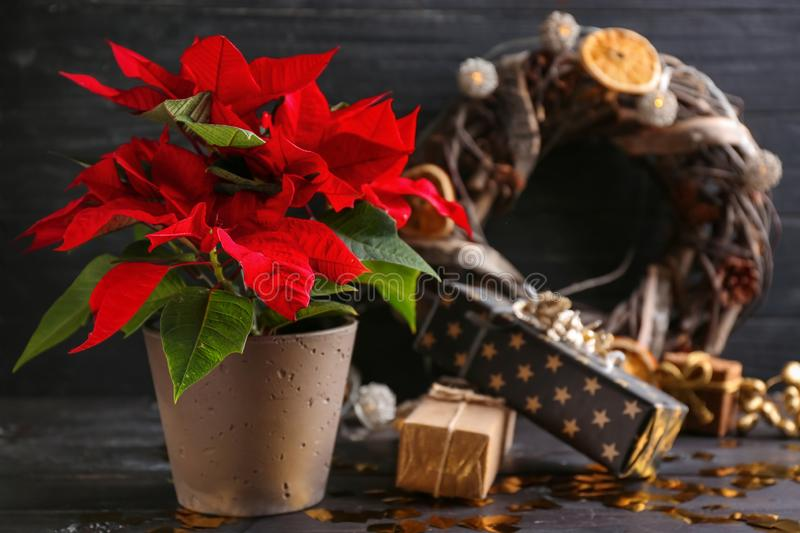 Christmas flower poinsettia with gift boxes on wooden table stock photography