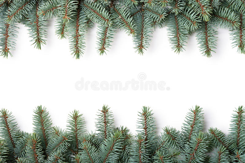 Christmas Frame. Branches of silver spruce on white background. Copy space royalty free stock images