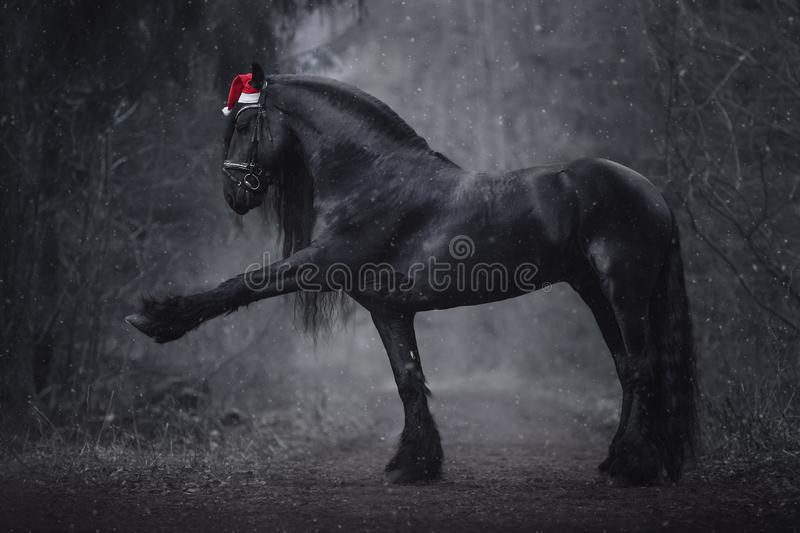 Christmas friesian stallion horse with long mane in red cap. Portrait of christmas friesian stallion horse with long mane in red cap with bridle performing royalty free stock photos