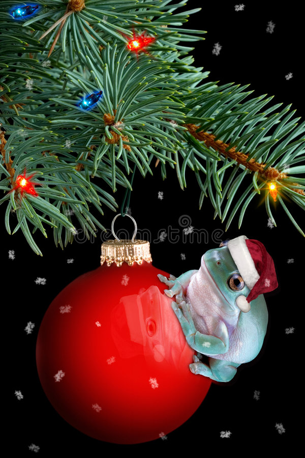 Christmas frog. A whites tree frog is sitting on a christmas ornament under the tree stock images