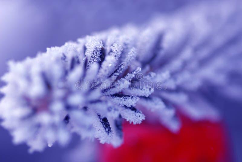 Download Christmas gift stock image. Image of xmass, close, closeup - 458853