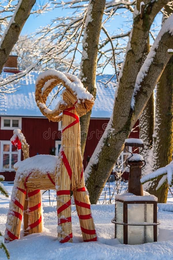 Christmas goat at Christmas with snow stock images