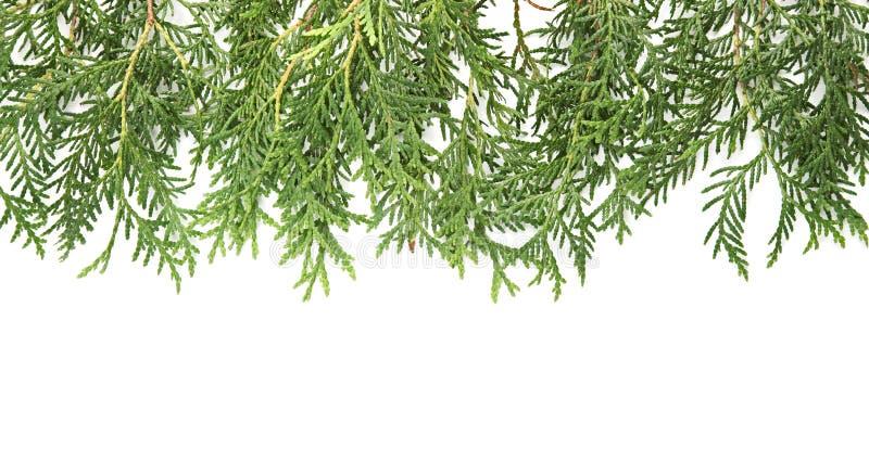Download Christmas green framework stock photo. Image of border - 22077356