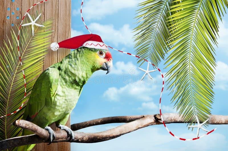 Christmas green parrot stock photos