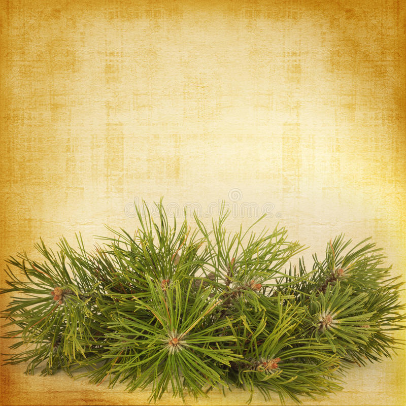 Christmas greeting card with branches of spruce