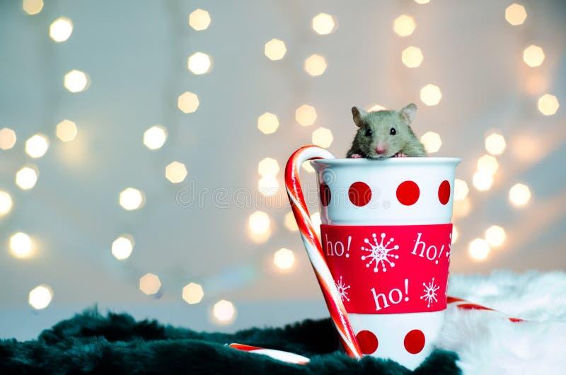 Christmas Hamster royalty free stock photo
