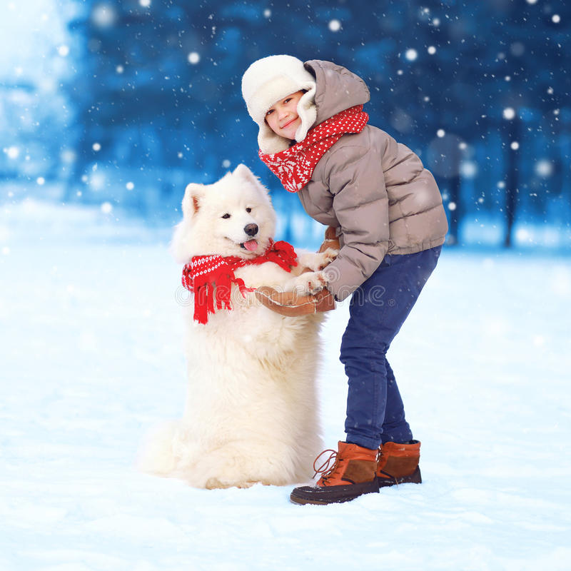 Christmas happy teenager boy playing with white Samoyed dog in winter day, dog gives paw child on snow walking together. Flying snowflakes stock image