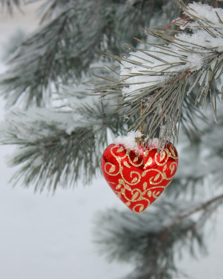 Christmas Heart Card - Stock Photo. Christmas Heart Card - Red Decoration: on Snow Covered Pine Branches Background - Outdoors royalty free stock image