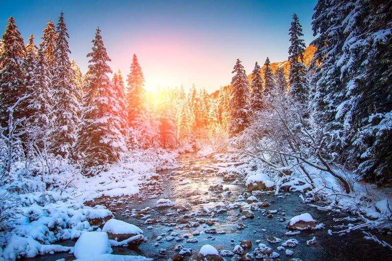 Christmas holiday background. Winter nature. Scenery snowy forest at sunrise. Frosty fir trees along mountain river at dawn. Bright sunlight in winter scene stock photos
