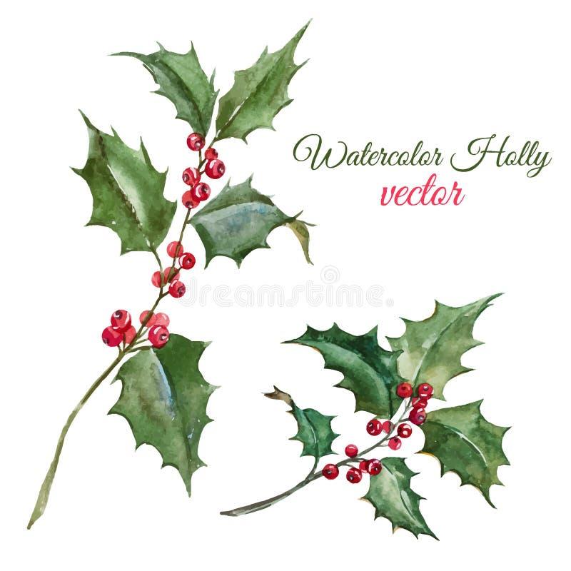 Christmas holly flower royalty free illustration