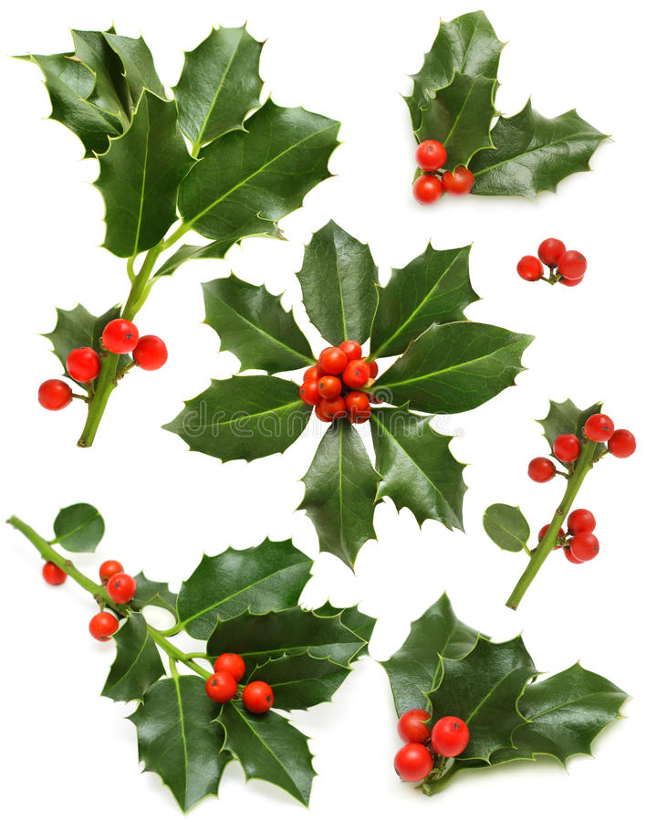 Free Christmas Holly - Green Leaf, Red Berry, Twig Royalty Free Stock Photos - 21782038