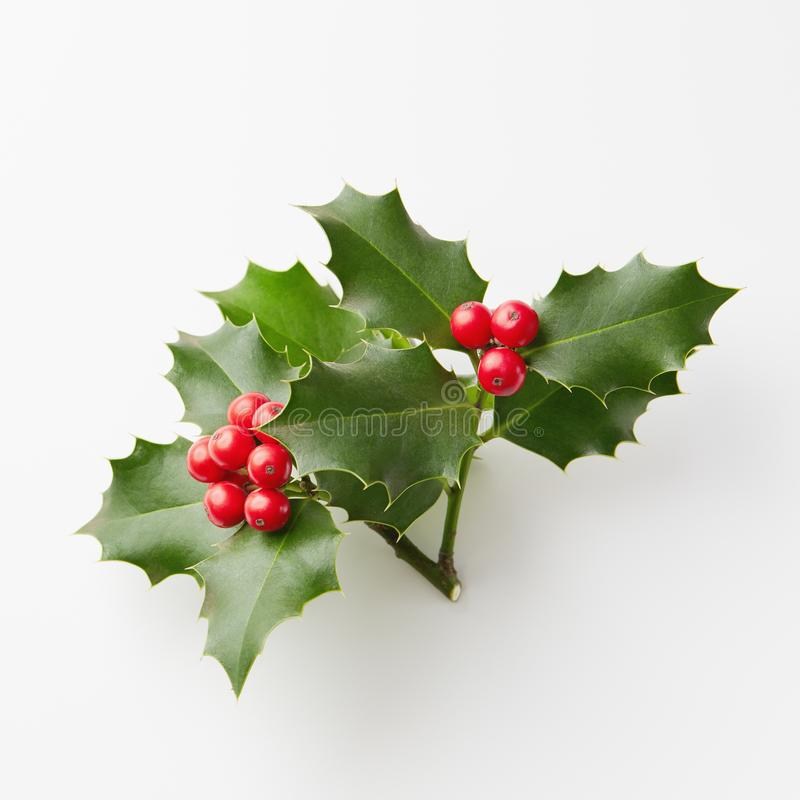Free Christmas Holly With Red Berries On White. Royalty Free Stock Photography - 103605437