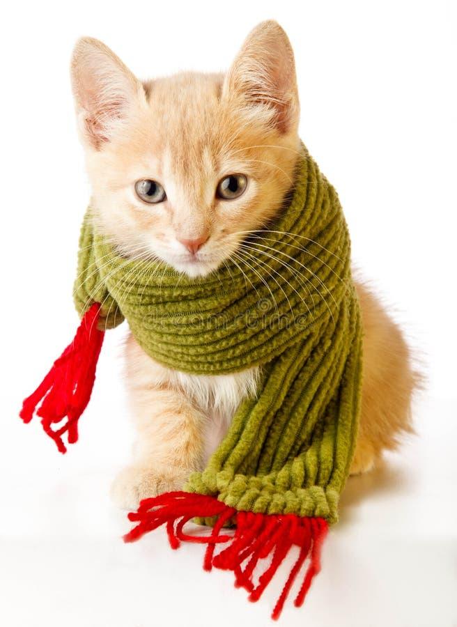 Download Christmas Kitten stock image. Image of animal, christmas - 25768839