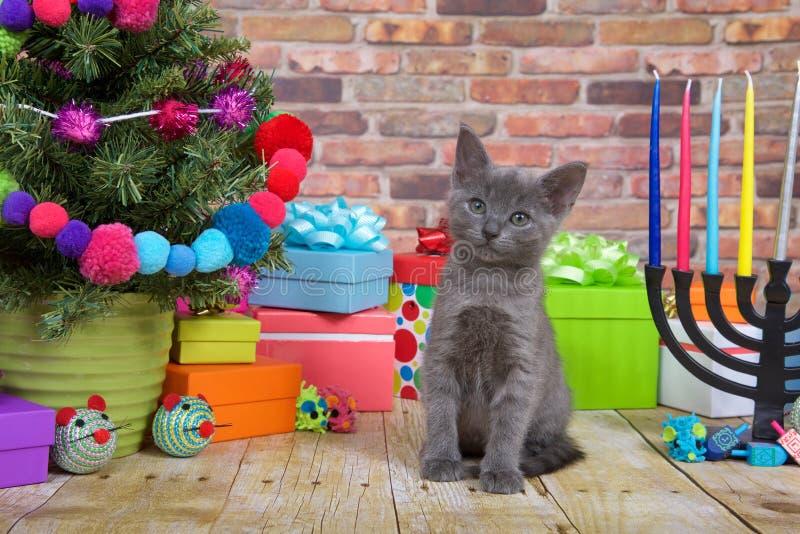 Christmas Kitten Close up royalty free stock photos