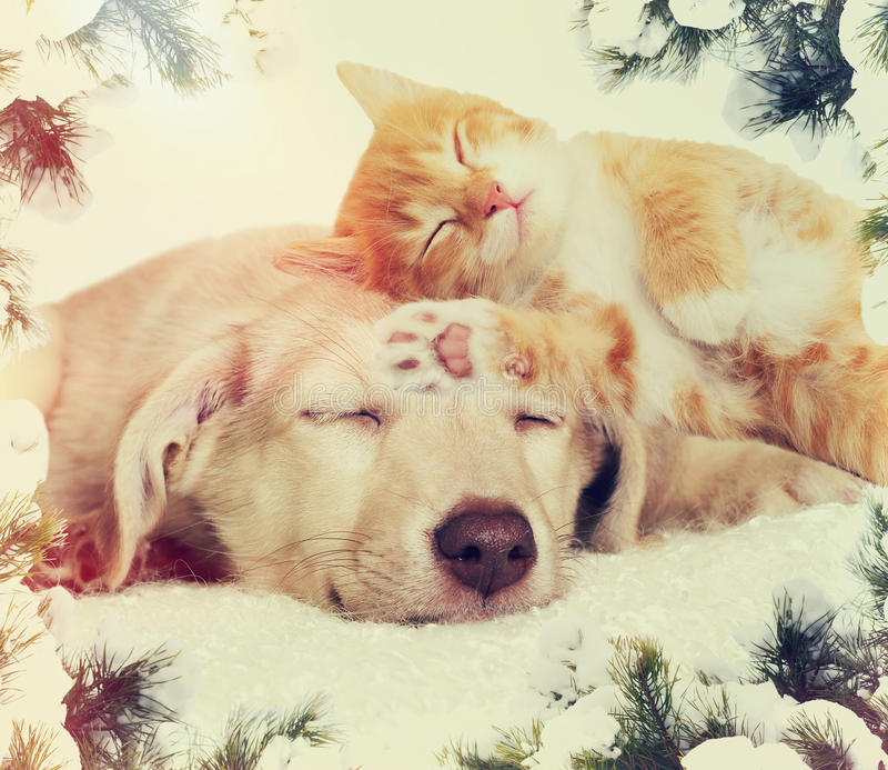 Christmas kitten and puppy sleeping stock images