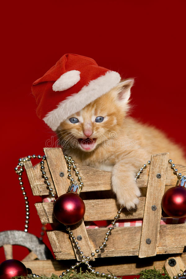 Christmas kitten on red background. Christmas kitten with santa cap on red background royalty free stock photo