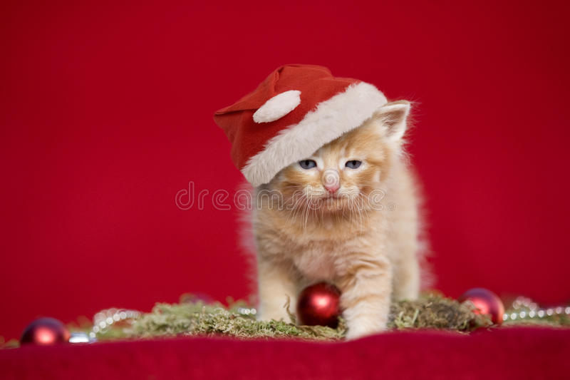 Christmas kitten on red background. Christmas kitten with santa cap on red background stock photos