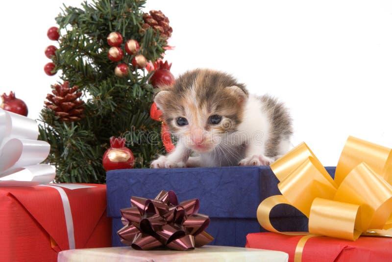 christmas kitten striped tree στοκ φωτογραφίες με δικαίωμα ελεύθερης χρήσης