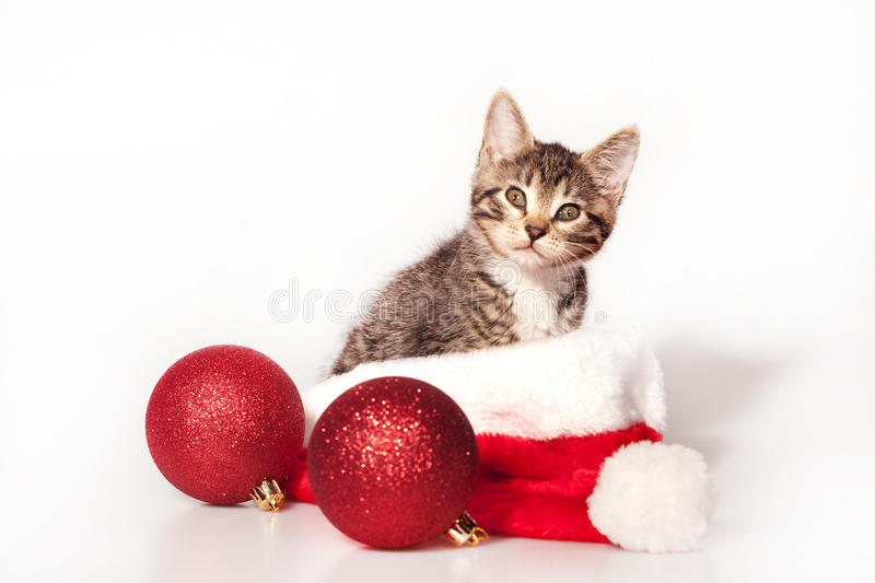 Christmas kitty. Little kitty sitting on the christmas decorations and headdress of santa claus stock photos