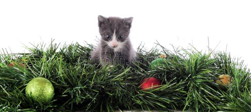 Christmas Kitty. An adorable kitten among evergreens and Christmas bulbs royalty free stock photography