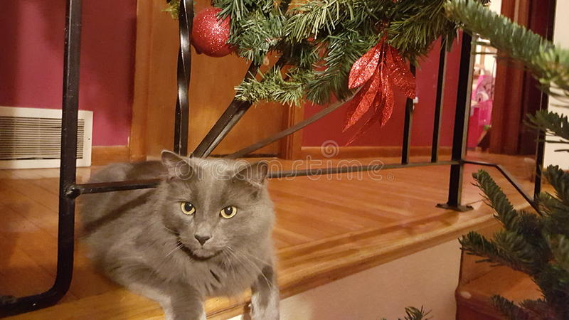 Christmas kitty. Beautiful Christmas kitty stock image