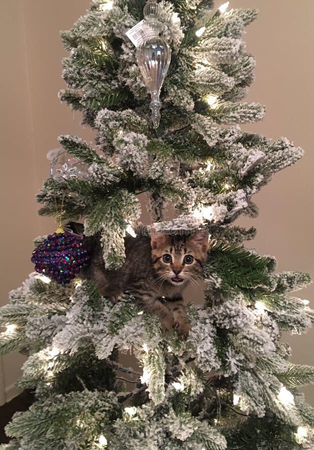 Christmas kitty. Kitty climbed Christmas tree stock photos