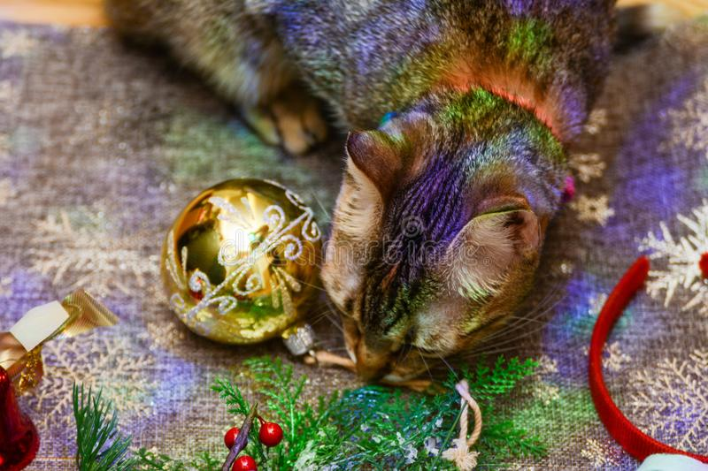 Christmas kitty decorations. Christmas decorations along with a tabby kitty playing with them royalty free stock photos
