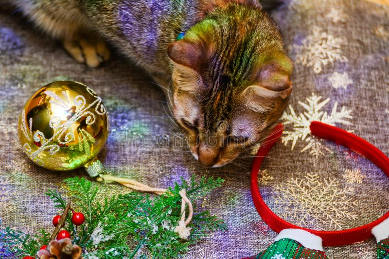 Christmas kitty decorations. Christmas decorations along with a tabby kitty playing with them royalty free stock images