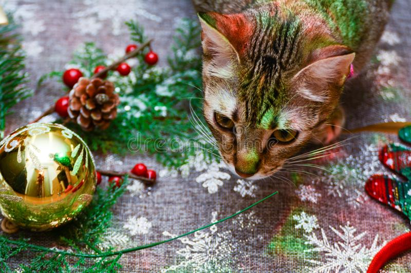 Christmas kitty decorations. Christmas decorations along with a tabby kitty playing with them stock image