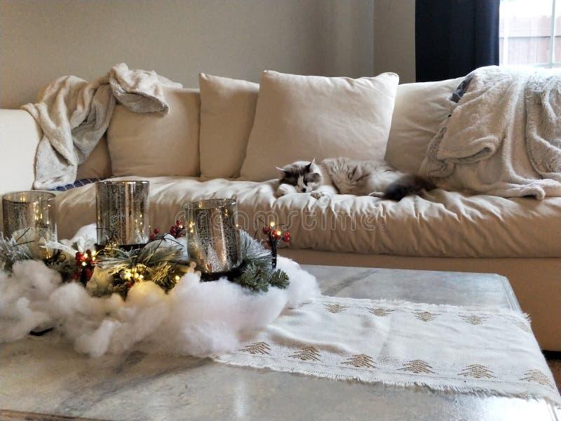 Christmas kitty. Lazy, asleeping kitty stock image