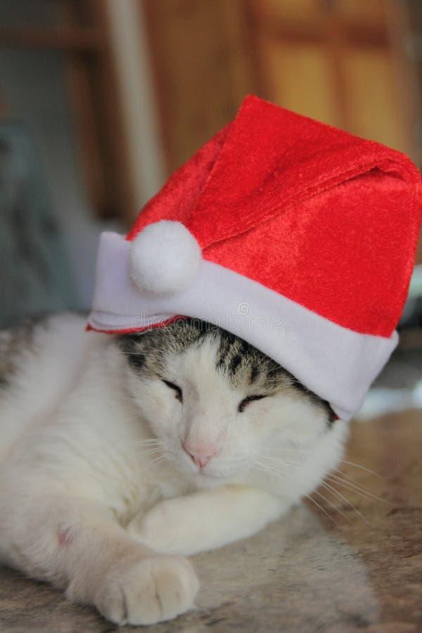 Christmas kitty stock photo